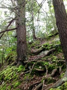 Trees_moss