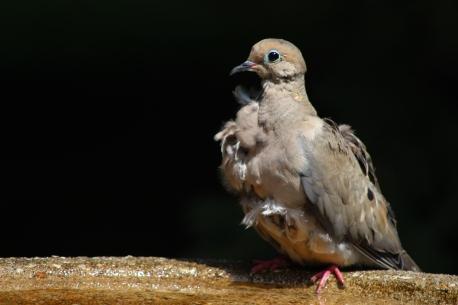 Birdbath-10